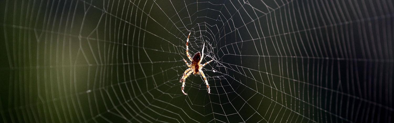 allgäuer-kammerjäger-spinnen